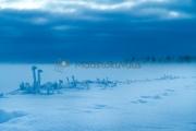 <h5>Eläimen jäljet lumessa</h5><p>25 asteen pakkasella. Eläimen jäljet kulkevat järven reunustalla. Tunnus: img_5243</p>