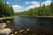 <h5>Ruunaan kosket Lieksassa</h5><p>Humuksen värjäämä vesi lainehtii Ruunaan kauniilla koskilla Pohjois-Karjalassa. Tunnus: img_9668</p>
