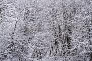 <h5>Huurteisia oksia</h5><p>Talven ensilumi on tarttunut puiden oksiin. Tunnus: img_8527</p>