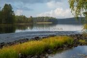 <h5>Ruska</h5><p>Järvi taittuu vuolaaksi koskeksi Lieksassa Pohjois-Karjalassa. Tunnus: img_1209</p>