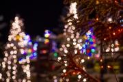 <h5>Koristeltuja joulukuusia pihalla</h5><p>Joulukuusia Rovaniemellä. Tunnus: img_5134</p>