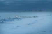 <h5>Kaamos</h5><p>Hämärän kaamospäivän järvimaisema. Tunnus: img_5238</p>