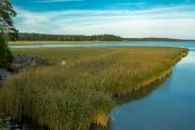 <h5>Kaislikko</h5><p>Kaislikkoa on Porvoon saaristossa kilometritolkulla. Tunnus: img_3328</p>