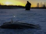 <h5>Kuhan pilkkijä</h5><p>Mies pilkkii kuhaa auringon laskiessa. Tunnus: img_4373</p>