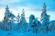 <h5>Lumen peittämä metsä</h5><p>Puut notkuvat paksusta lumesta. Tunnus: img_5225</p>