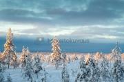 <h5>Lappi ja luminen maisema</h5><p>Suometsä on lumen peittämä. img_5203</p>
