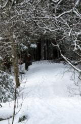 <h5>Luminen polku</h5><p>Lenkkipolku Vantaanjoen varrella Pitkäkoskella. Tunnus: img_4935</p>