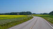 <h5>Maalaistie</h5><p>Peltojen halki kulkeva tie. Kukkivia rypsikasveja näkyy keltaisenaan pelloilla. Tunnus: img_3110</p>