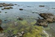 <h5>Merilevä</h5><p>Rannan tuntumassa kasvavaa merilevää. Tunnus: img_4192</p>