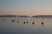 <h5>Poiju</h5><p>Poijuja Saaristomerellä. Tunnus: img_3959</p>