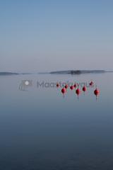 <h5>Saaristomerellä</h5><p>Poijuja Saaristomeren eräässä satamassa tyynenä kesäaamuna. Tunnus: img_3981</p>