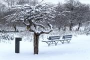 <h5>Autiot puiston penkit</h5><p>Jouluaattona oululaisen puiston penkit olivat autioita. Tunnus: img_5160</p>