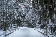 <h5>Talvinen puistotie</h5><p>Oululaisessa puistossa kulkeva kävelytie, joka halkoo kaunista havupuumetsikköä. Tunnus: img_5169</p>