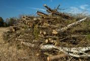 <h5>Risuja</h5><p>Metsän harvennuksen tuloksena syntynyt risukasa. Tunnus: img_2422</p>