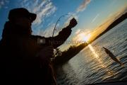 <h5>Mies nostaa kalan</h5><p>Kalamies nostaa kuhan, joka on kalastettu jigillä. Tunnus: img_4847</p>