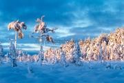 <h5>Sininen hetki talvella</h5><p>Aurinko on juuri laskemassa ja sininen heti valtaa luonnon. Tunnus: img_5208</p>