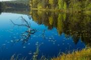 <h5>Ruska lammella</h5><p>Erän pieni järvi Pohjois-Karjalassa syyskuun ruskassa. Tunnus: img_4327</p>