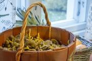 <h5>Suppilovahveroita</h5><p>Korillinen lokakuussa kerättyjä suppilovahveroita. Tunnus: img_6686</p>