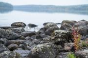 <h5>Syksyinen järvimaisema</h5><p>Varhainen aamu erään Pohjois-Karjalan järven rannalla. Tunnus: img_1063</p>