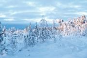 <h5>Pohjois-suomalaista talvimaisemaa</h5><p>Soinen talvinen erämaa. Tunnus: img_5191</p>