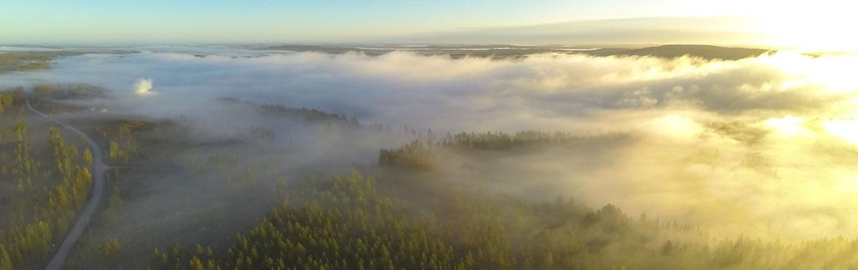 Ilmakuva metsästä aamu-usvassa