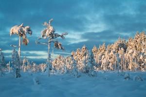 Valokuvia talvesta